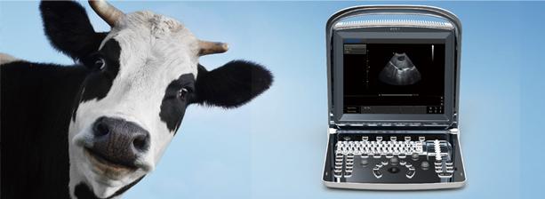 Портативный аппарат УЗИ для животных «ECO1VET»